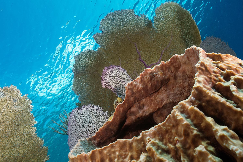 Reef Scene 2